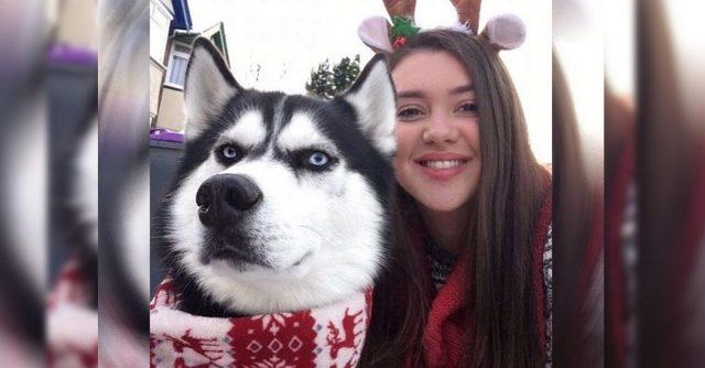 anuko-el-grinch-de-los-perros-navidad