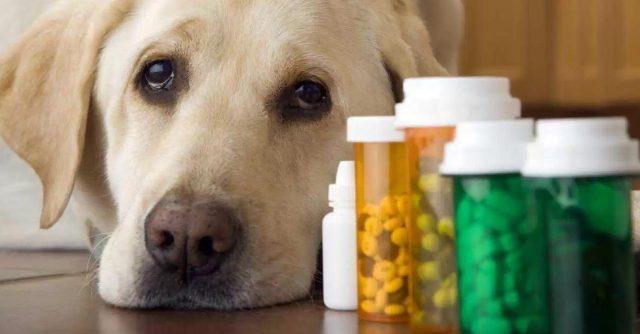 medicinas-compartir-con-animales