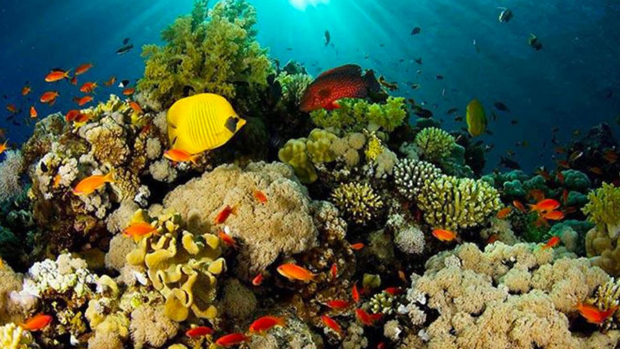 INAPESCA continúa con el rescate de coral y arrecifes en en estado - Quintana  Roo Hoy