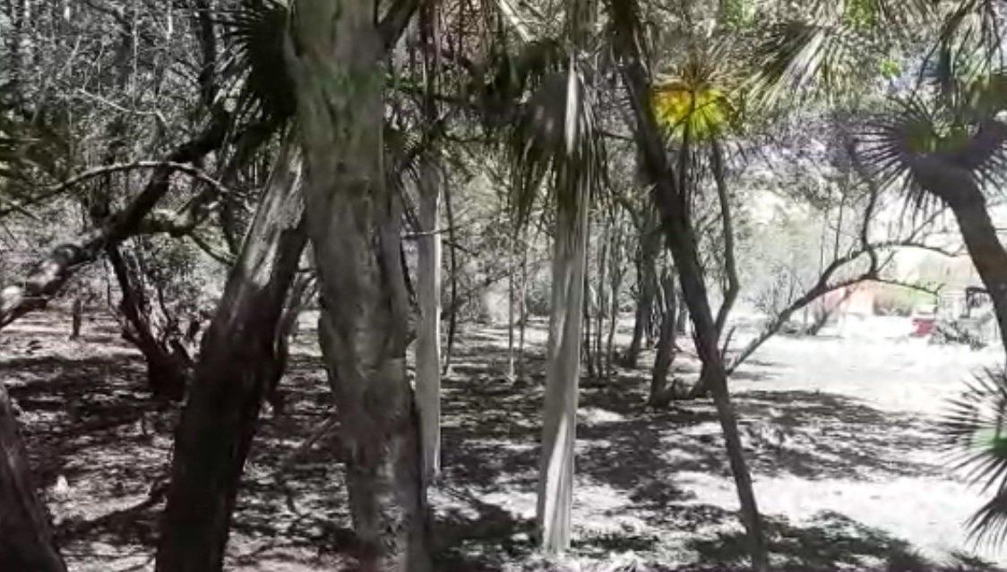 Denuncian tala de manglares en Tulum para hacer caminos